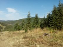 Mountains and forests. The log next to the pine trees is standing alone, Photographed in Romania Royalty Free Stock Photo