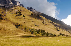 Mountains of the French Alps. With some trees on a sunny day Stock Photography