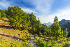 Mountains of Gran Canaria island Stock Photos