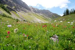 Mountains and grassland stock image