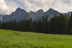 Mountains grassland. Green grassland and mountains summits stock photography