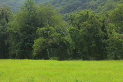 Mountains. Green mountains with a field Royalty Free Stock Photography