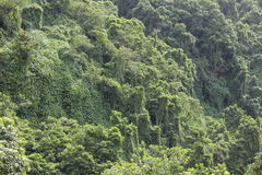 Mountains green. Mountains maui island, very good for any kind of manipulation Royalty Free Stock Photography