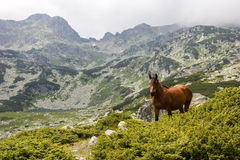 Mountains. Green Mountains in Romania Royalty Free Stock Photography