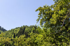 Mountains in the greenery. Tien shan mountains in the greenery near the city of Almaty Stock Photos