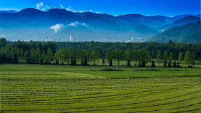 Mountains and Harvest Royalty Free Stock Photo