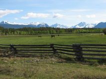 Mountains and horses. Green meadow with horses in front of the mountains royalty free stock photos