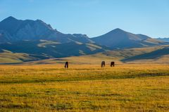 Mountains and horses by Song Kul lake. Mountains and horses around Song Kul lake, Kyrgyzstan Stock Photo