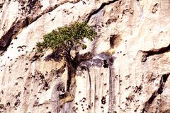 Mountains. An isolated tree on a mountain of kurdistan royalty free stock images