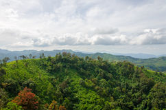 Mountains and jungle with mist in foggy weather in Thailand Stock Photos