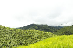 Mountains and jungle in (Nan) Thailand. Mountains and jungle with mist in foggy weather in (Nan) Thailand Royalty Free Stock Photography