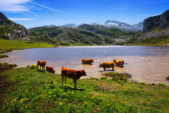 Mountains   lake and cows Royalty Free Stock Photography