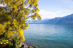 Mountains and lake Geneva. From the Embankment in Montreux. Switzerland Stock Images
