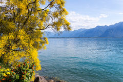 Mountains and lake Geneva. From the Embankment in Montreux. Switzerland Royalty Free Stock Photography