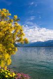 Mountains and lake Geneva. From the Embankment in Montreux. Switzerland Stock Photos