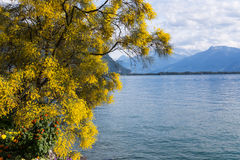 Mountains and lake Geneva. From the Embankment in Montreux. Switzerland Stock Image