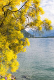 Mountains and lake Geneva Stock Images