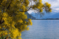 Mountains and lake Geneva. From the Embankment in Montreux. Switzerland Stock Photo