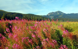 Mountains landscape. Tatra Mountains landscape, in the valley royalty free stock image