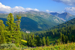 Mountains landscape with cedar  forest Royalty Free Stock Photos