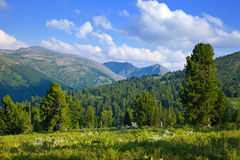 Mountains landscape with cedar  forest Royalty Free Stock Photo