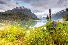 Mountains landscape and fjord in Norway Stock Photography