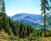 Mountains landscape with forest and big tree Royalty Free Stock Images