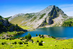 Mountains landscape with lake and pasture Royalty Free Stock Photography