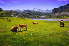 Mountains landscape with lake and pasture Royalty Free Stock Photo