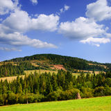 Mountains landscape with pine forest Royalty Free Stock Photo
