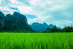 Mountains landscape rice nature Stock Images