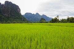 Mountains landscape rice nature Stock Photos