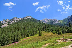 Mountains landscape in summer Royalty Free Stock Photography