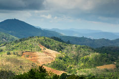 Mountains landscape with tea plantations Stock Images
