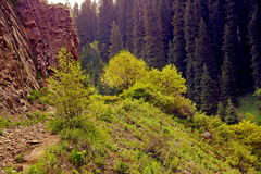 Mountains landscape. In the mountains of Trans-Ili Alatau, Kimisarovsoe gorge Royalty Free Stock Image