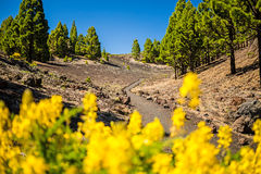 Mountains landscape, volcanic island La Palma Stock Photography