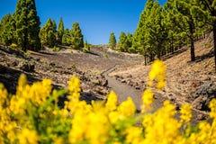 Mountains landscape, volcanic island La Palma Stock Photography