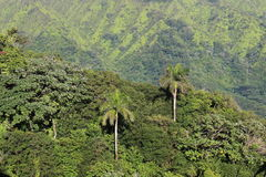 Mountains landskape. Mountains landscape with palm trees in Hawaii Stock Image
