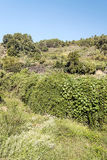 Mountains with leaves. And trees situated in the spanish province of caceres. It´s a vertical picture in a sunny day. You can see some flowers Royalty Free Stock Photo