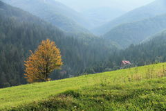 The mountains. Lonely yellow tree Stock Images