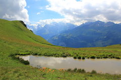 Mountains with Mürren and little pond at Männlic. View at the mountains of the Lauterbrunnen valley Maennlichen. Little pond with flowers. Mountain stock photo