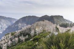 Mountains on Madeira Island. Stock Image