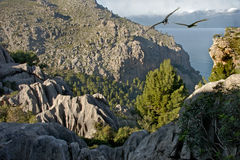 Mountains of Majorca. The mountainous area of Northern Majorca, Spain Royalty Free Stock Photo