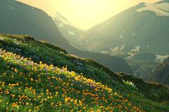 Mountains meadow Stock Images