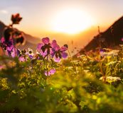 Mountains meadow Royalty Free Stock Photography