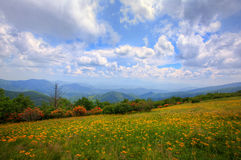 Mountains meadow Royalty Free Stock Image