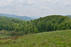Mountains and meadow from Daffodils Glade (in Romanian: Poiana Narciselor). Stock Images