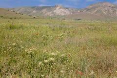 Mountains and meadow Stock Photos