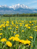 Mountains and meadow Stock Photography