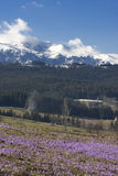 Mountains and meadow in spring Royalty Free Stock Images